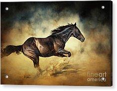 Black Stallion Horse Galloping Like A Devil Acrylic Print