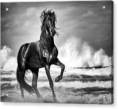 Acrylic Print featuring the photograph Black Stallion In Waves by Gigi Ebert