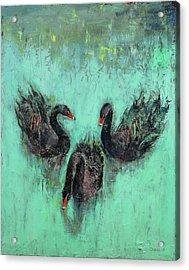 Black Swans Acrylic Print by Michael Creese