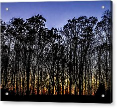 Acrylic Print featuring the photograph Black Trees by Onyonet  Photo Studios