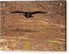 Acrylic Print featuring the digital art Black Vulture In Flight by Chris Flees