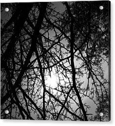 Black Walnut Spikes Acrylic Print by Anna Villarreal Garbis