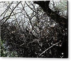 Black Walnut Spikes II Acrylic Print