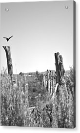 Blackbird Fly Acrylic Print by Everett Bowers