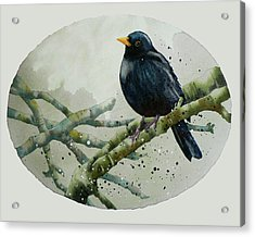 Blackbird Painting Acrylic Print by Alison Fennell