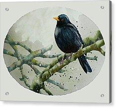 Blackbird Painting Acrylic Print