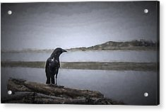Blackbird Surveys The Bay Acrylic Print