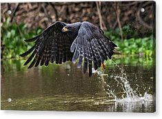 Acrylic Print featuring the photograph Blackhawk Fishing #1 by Wade Aiken
