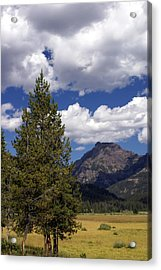 Blacktail Plateau Vertical Acrylic Print by Marty Koch