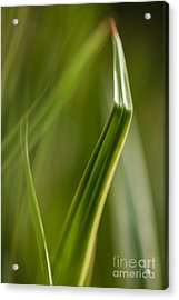 Blades Abstract 3 Acrylic Print by Mike Reid
