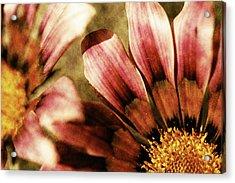 Blanket Flowers Acrylic Print