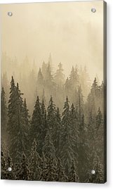 Acrylic Print featuring the photograph Blanket Of Back-lit Fog by Dustin LeFevre