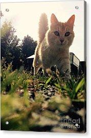 Blaze The Cat Acrylic Print by Mary Tron