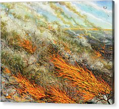 Blaze Acrylic Print by Tilly Willis