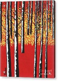 Blazing Birches Acrylic Print