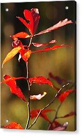 Blazing Fire Acrylic Print by Lori Mellen-Pagliaro