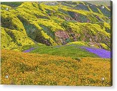 Acrylic Print featuring the photograph Blazing Star On Temblor Range by Marc Crumpler