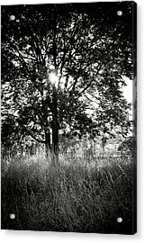 Blazing Tree Acrylic Print