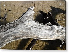 Bleached Driftwood Acrylic Print by Mary Haber