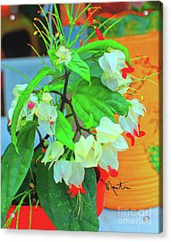 Bleeding Heart II Acrylic Print