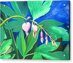 Bleeding Hearts Acrylic Print by Carrie Auwaerter