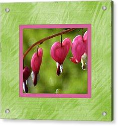Bleeding Hearts Acrylic Print by Lori Seaman