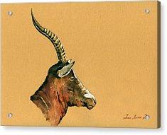 Blesbok Acrylic Print by Juan  Bosco