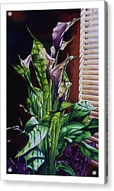Blind Luck Lilies Acrylic Print by Mike Hill