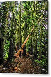 Blocked Trail Acrylic Print