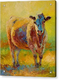 Blondie - Cow Acrylic Print