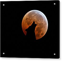 Blood Full Moon And The Wolf Acrylic Print by Marianna Mills