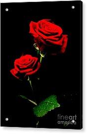 Blood Red Roses Acrylic Print by Valia Bradshaw