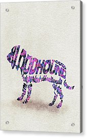 Bloodhound Dog Watercolor Painting / Typographic Art Acrylic Print