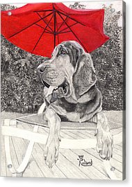 Bloodhound Under Umbrella Acrylic Print by Tracy Dupuis Roland