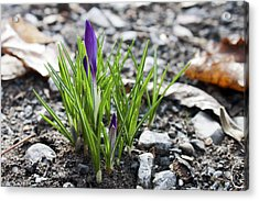 Acrylic Print featuring the photograph Bloom Awaits by Jeff Severson
