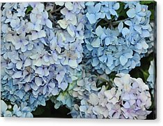 Bloom Cluster Acrylic Print by JAMART Photography