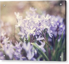 Bloom Acrylic Print by Lisa Russo