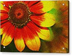 Bloom Acrylic Print by Melisa Meyers