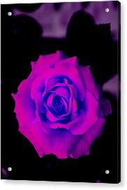 Bloom N Love Acrylic Print by Debbie May