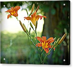 Bloom Where You're Planted Acrylic Print by Cricket Hackmann