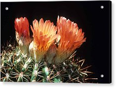Bloomin' Barrel Acrylic Print by Laurie Paci