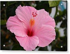 Bloomin Beauty Acrylic Print by Bradley Nichol