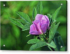 Acrylic Print featuring the photograph Bloomin by Glenn Gordon
