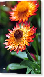 Bloomin' Loverly Acrylic Print by J DeVereS