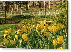 Bloomin Tulips Acrylic Print