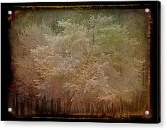 Blooming Antique Amber Acrylic Print by Aimee L Maher Photography and Art Visit ALMGallerydotcom