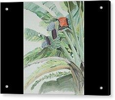 Blooming Banana Acrylic Print by Hilda and Jose Garrancho