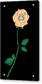 Blooming Bengal Acrylic Print