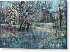 Blooming Bradford Acrylic Print