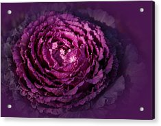 Blooming Cabbage Acrylic Print by Angie Tirado